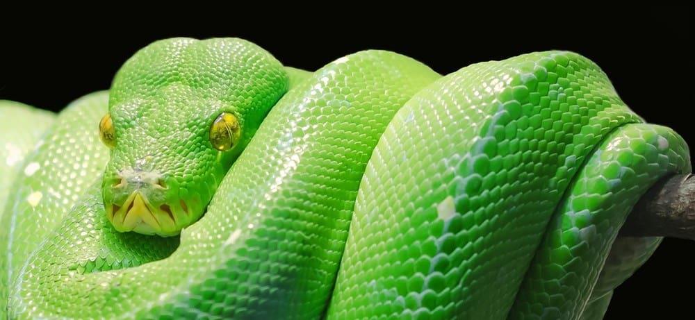 reptile kids parties