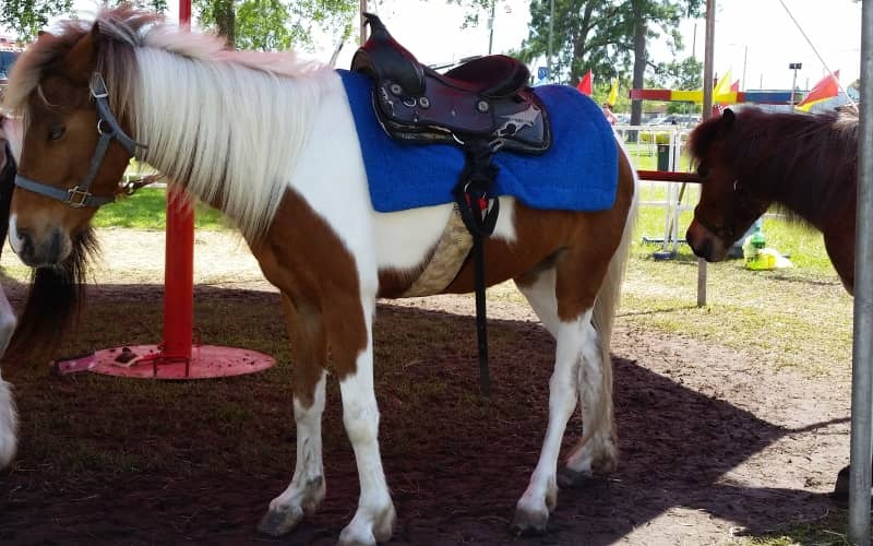 Circus Fun Productions traveling pony rides for parties in Northern NJ
