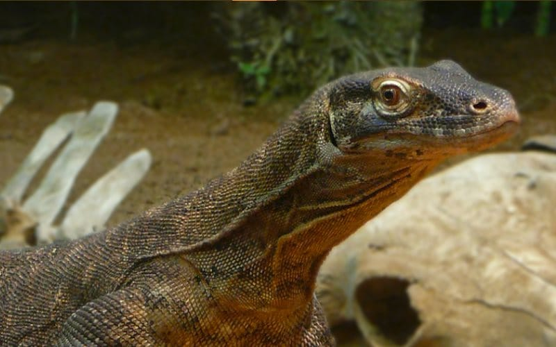 Clyde Peeling's Reptiland Reptile Show Parties for Kids in PA