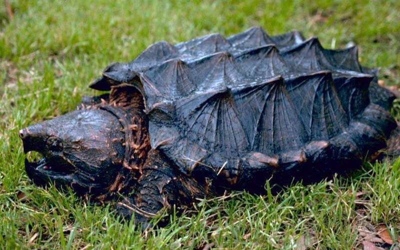Roaming Reptiles Of Central Florida Reptile Parties For Children In