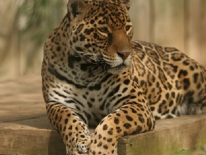 Catoctin Wildlife Preserve And Zoo Animal Themed Parties In Maryland