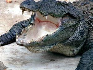 Croc Encounters Kids Reptile Parties in Tampa