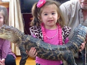 Curious Creatures Kids Reptile Parties In Massachusetts