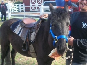 Ironside Farms Kids Pony Riding Parties In Bergen County NJ