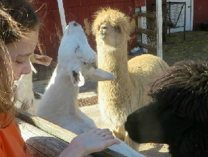 marys go round petting zoo party services in waldorf charles county md
