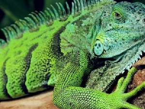 New England Reptile and Raptor Exhibits Reptile Parties In Massachusetts