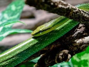 NJ Snakeman