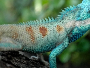 reptile world educational themed party service in bowie md