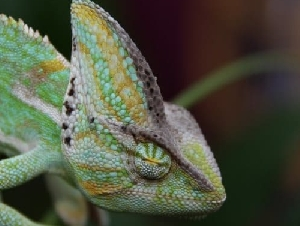 Reptile World Reptile Parties For Children In MD