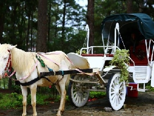 Town and Country Carriage